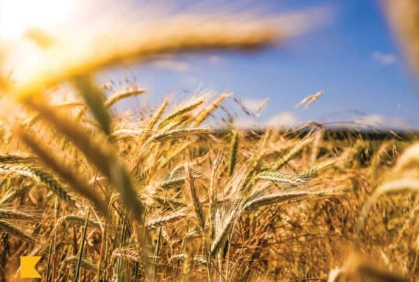Advanced Tax Planning for Next Year for Farm Businesses